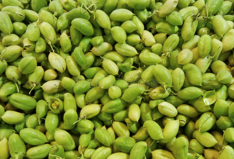 Green Garbanzo (Chickpea) Bean Background stock images