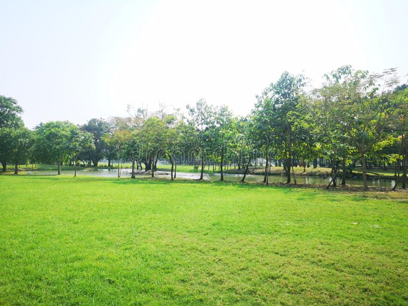 green garden nature background grass and bush tree in park stock photos