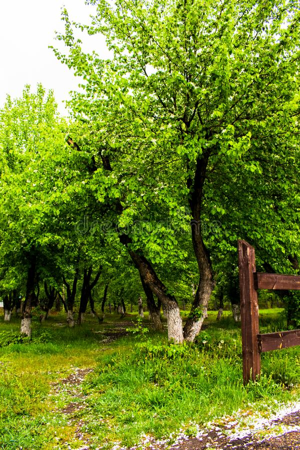 Green garden with path. Green garden path. Nice trees and plants in a garden. Blossoming garden stock photography