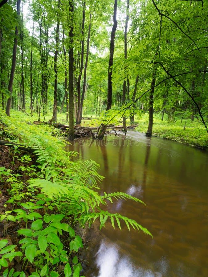Green Garden - River - Spring royalty free stock photos