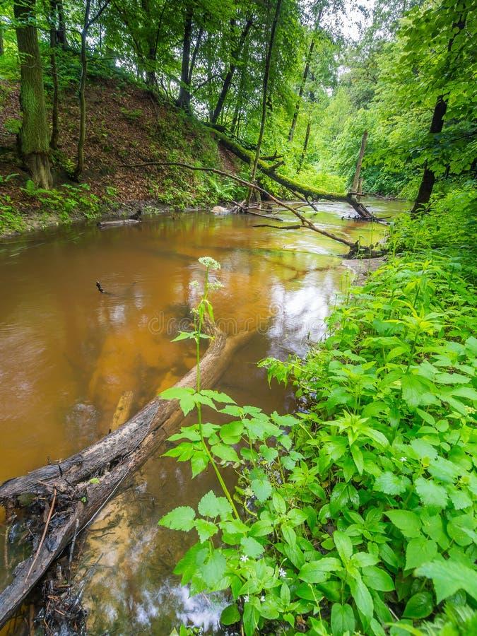 Green Garden - River - Spring royalty free stock photography