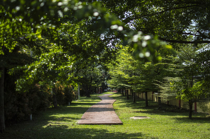 Green garden with trees and pathway stock images