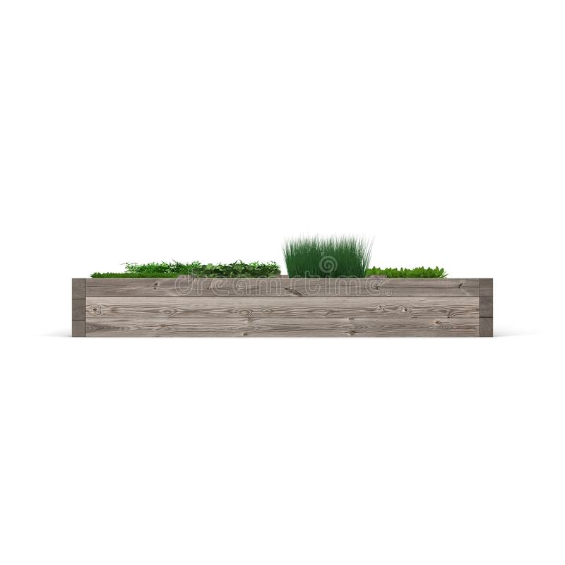 Green garden in a wooden box on white. Side view. 3D illustration stock illustration