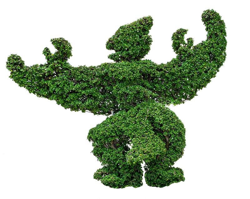 Green garuda shaped tree isolated on white background stock photography