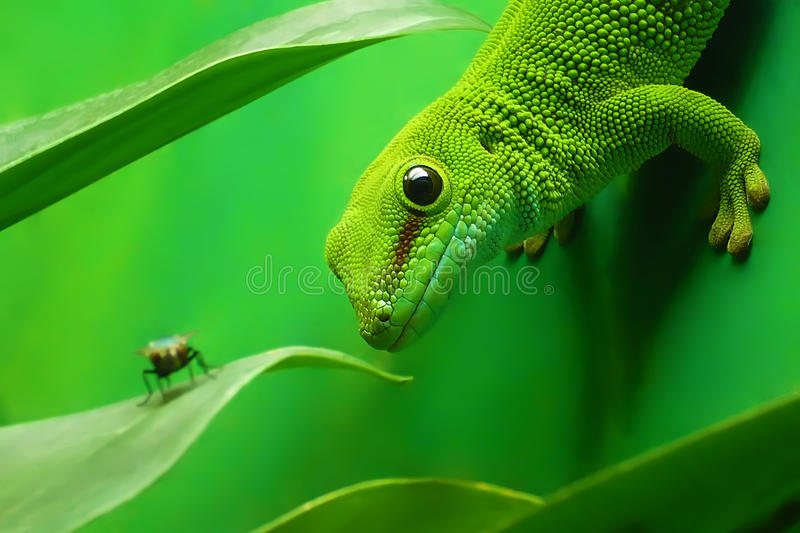Green gecko lizard. On the vertikal green wall surrounded by plants stock photo