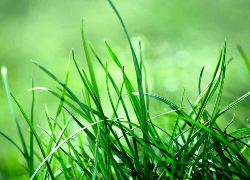 Green stock images