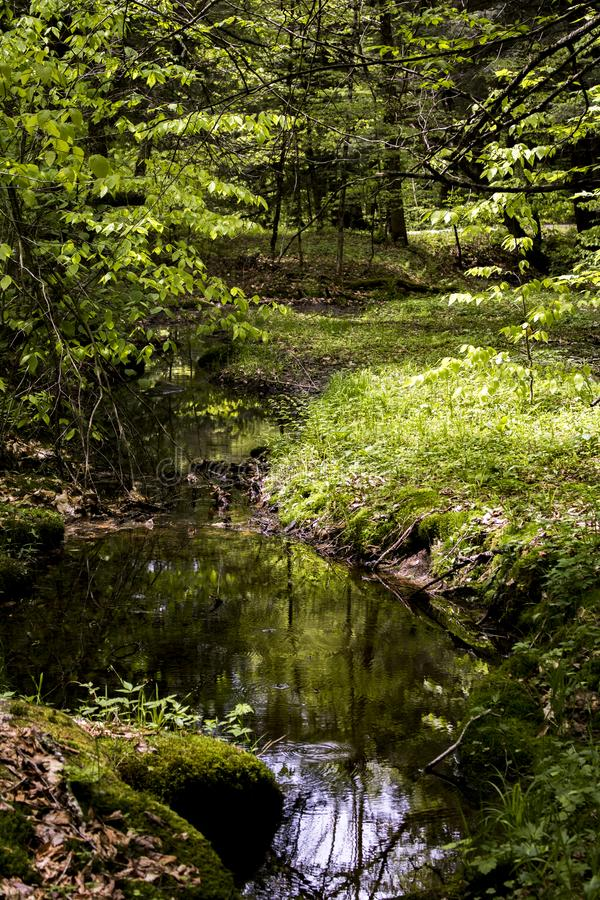Green, glowing forest scene in upstate New York. Vivid, green woodland and fresh water stream in upstate new York royalty free stock image