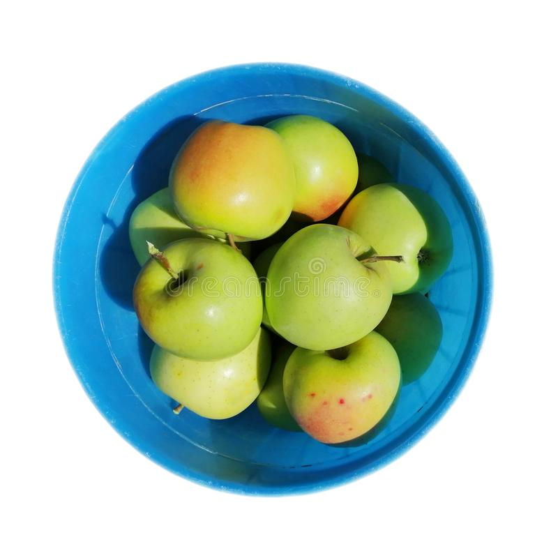 Green golden apples in a blue bucket, top view. the idea is a crop. isolated on white background. square composition. royalty free stock images