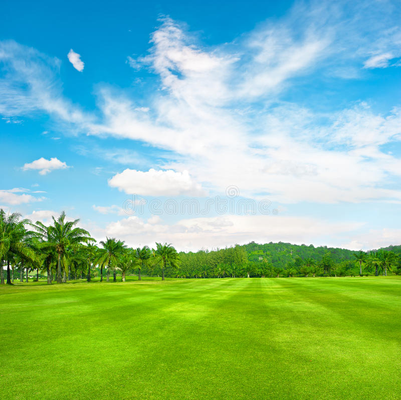 Green golf field with palms over cloudy sky. Background stock photos
