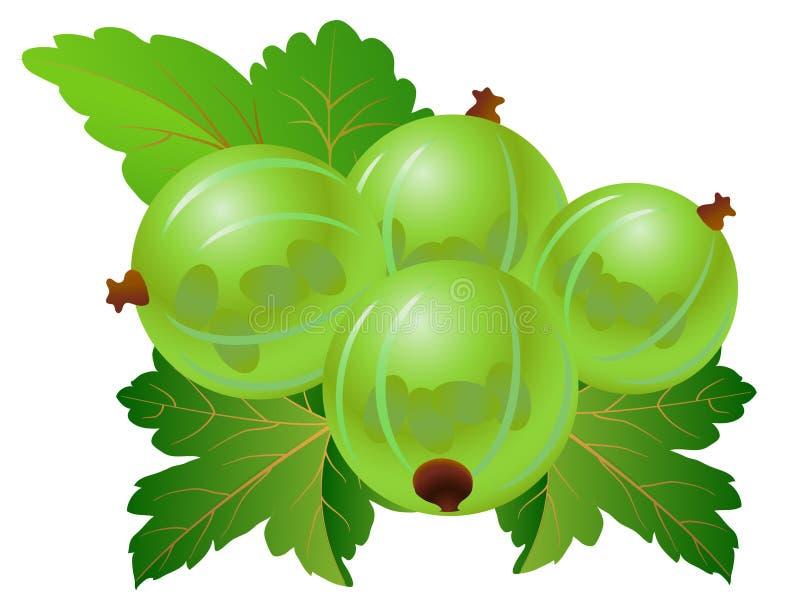 Download Green gooseberry stock vector. Image of gooseberry, vegetarian - 14358058