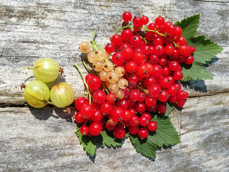 Green gooseberry and red and yellow currants royalty free stock photos