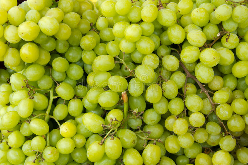 Download Green grape stock image. Image of produce, white, seedless - 26085835