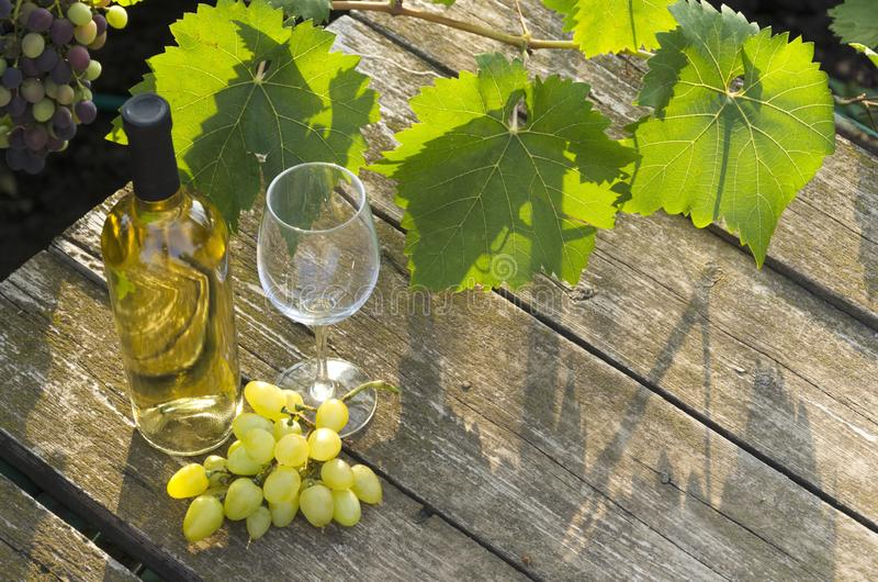 Green grape leaves, bottle of white wine, glass and juicy grapes on the rural wooden table.Natural light in the morning stock photos