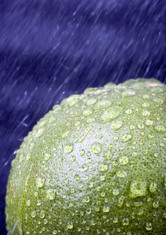 Green grapefruit stock photos