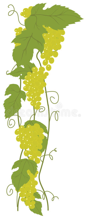 Green Grapes royalty free illustration