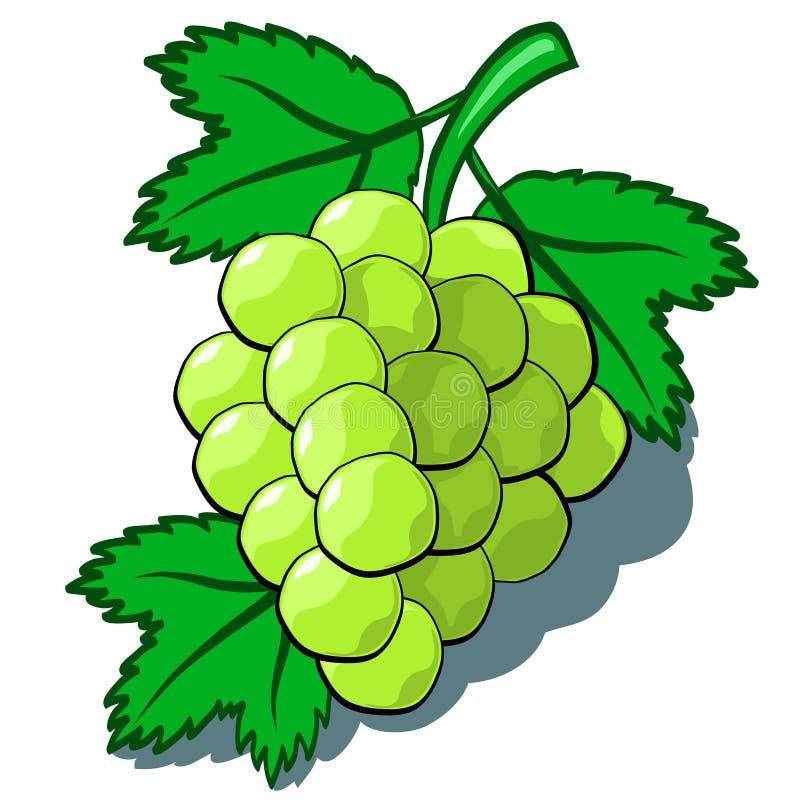 Green Grapes stock vector. Illustration of vector, happy ...