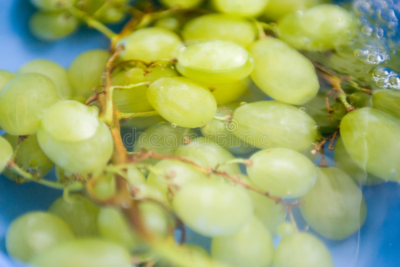 Download Green grapes in water stock image. Image of ripe, healthy - 979693