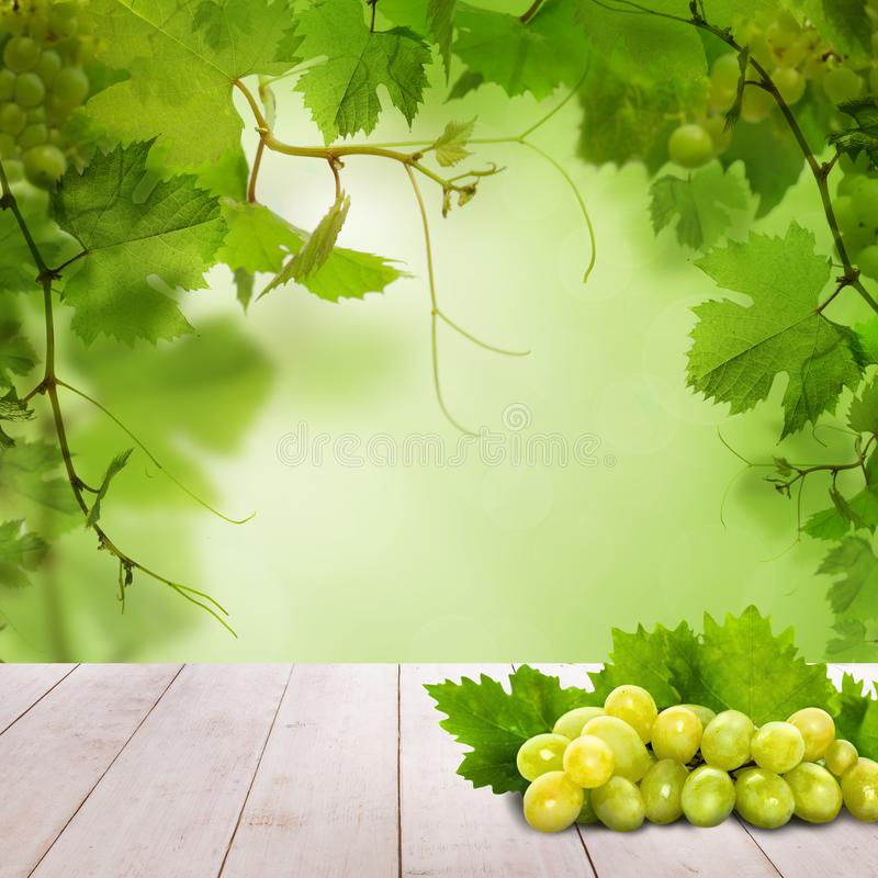 Green grapes on white wooden table against abstract green leaves background.  stock illustration
