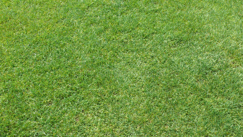 Download Green grass stock photo. Image of texture, outdoors, green - 10578746