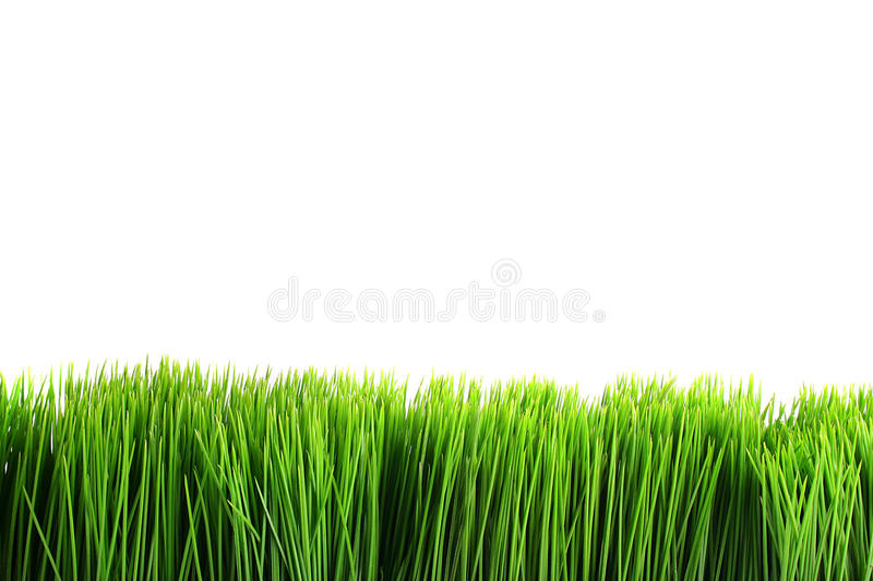Green grass. On a white background. Use, as a design element is possible stock photography