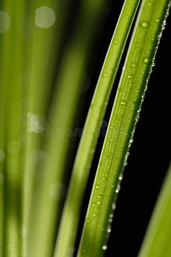 Download Green grass stock image. Image of nature, green, water - 13463907