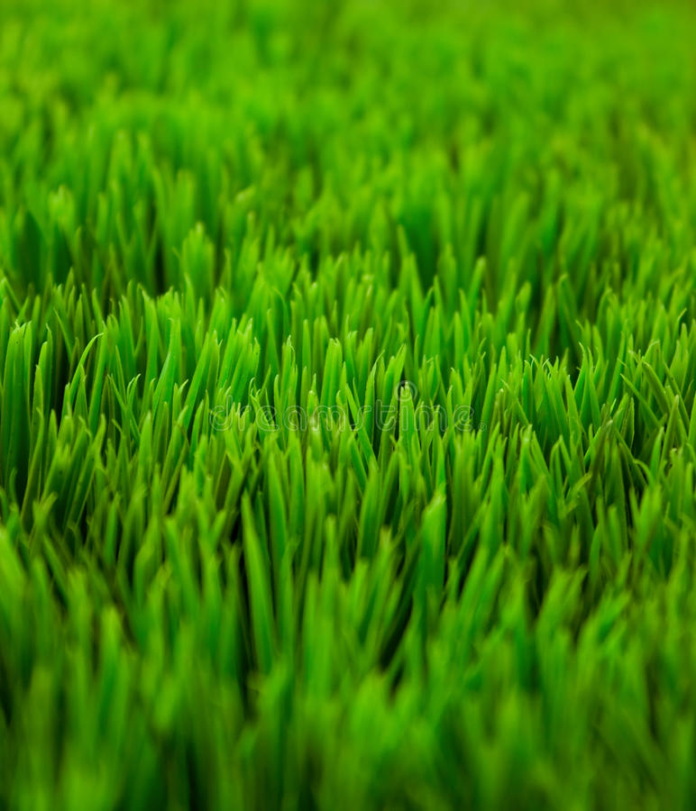 Free Green Grass Stock Photography - 13950872