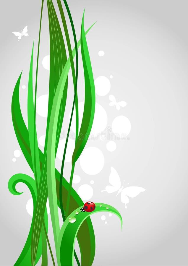 Green grass royalty free stock photo