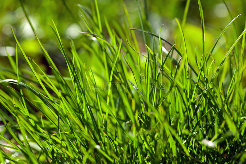 Download Green Grass Royalty Free Stock Photo - Image: 14027275
