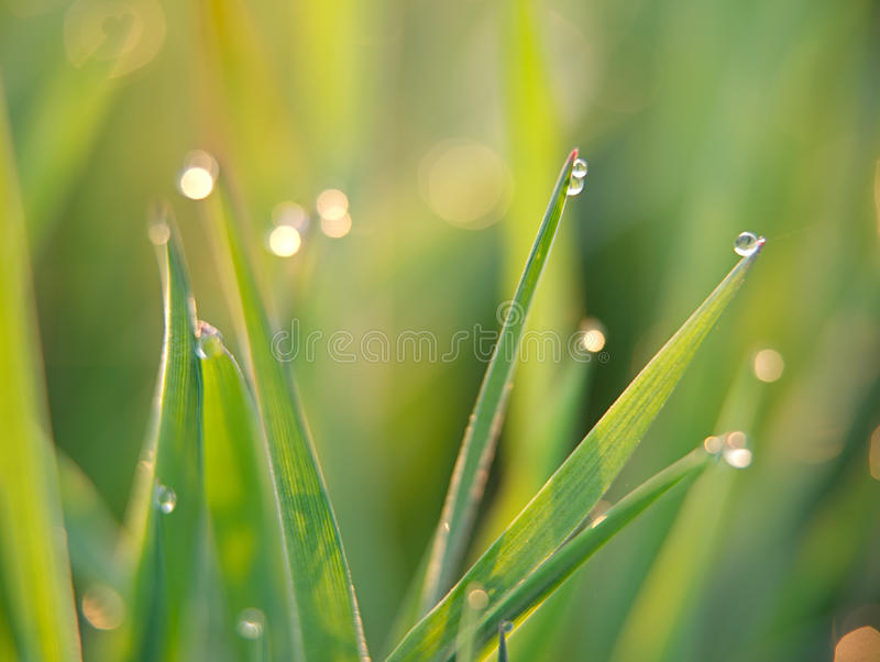 Download Green grass stock image. Image of grass, drop, lawn, environment - 14291537