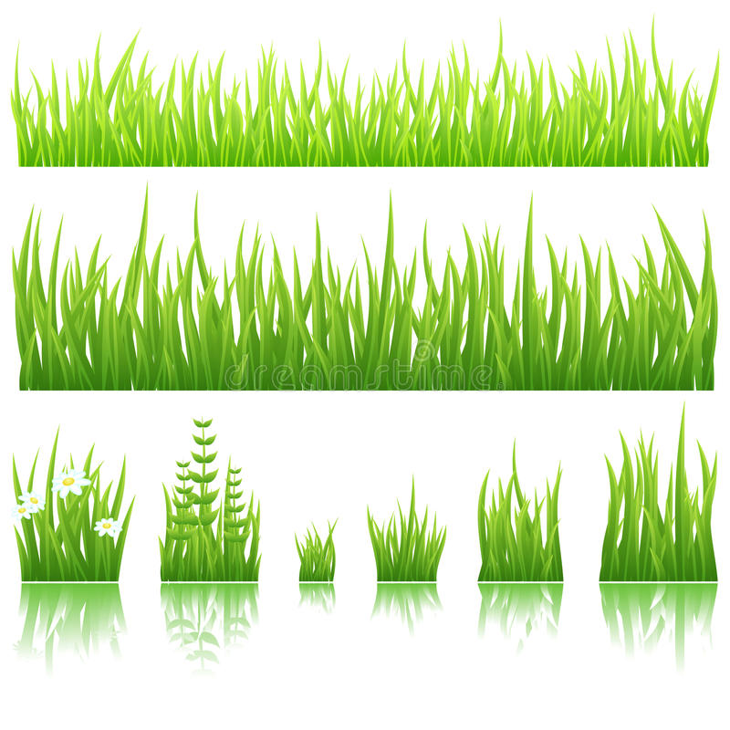 Green grass. Different types of green grass isolated on white background
