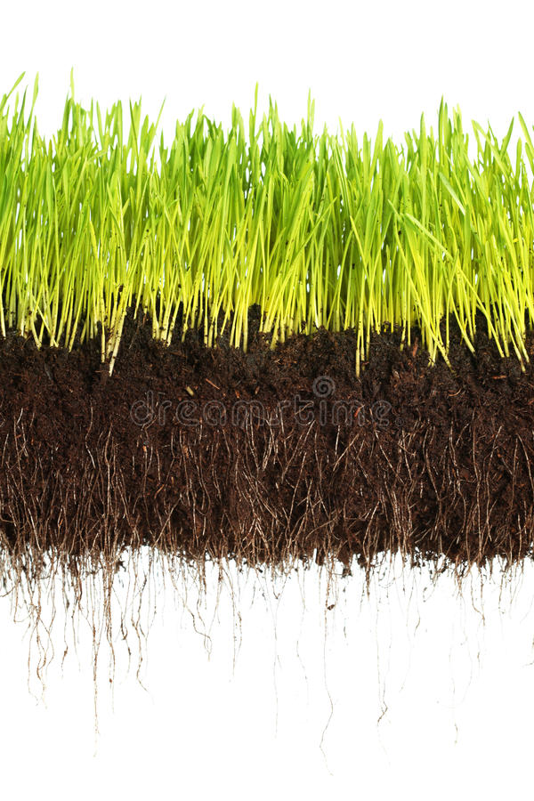 Download Green Grass Stock Photography - Image: 17915062