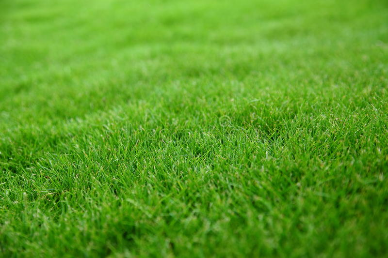 Download Green Grass Stock Images - Image: 18813724