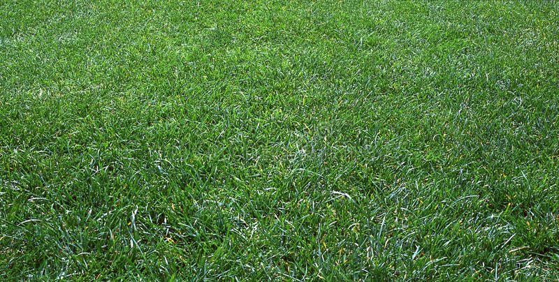 Green grass. Long green lawn grass not mowed stock photography