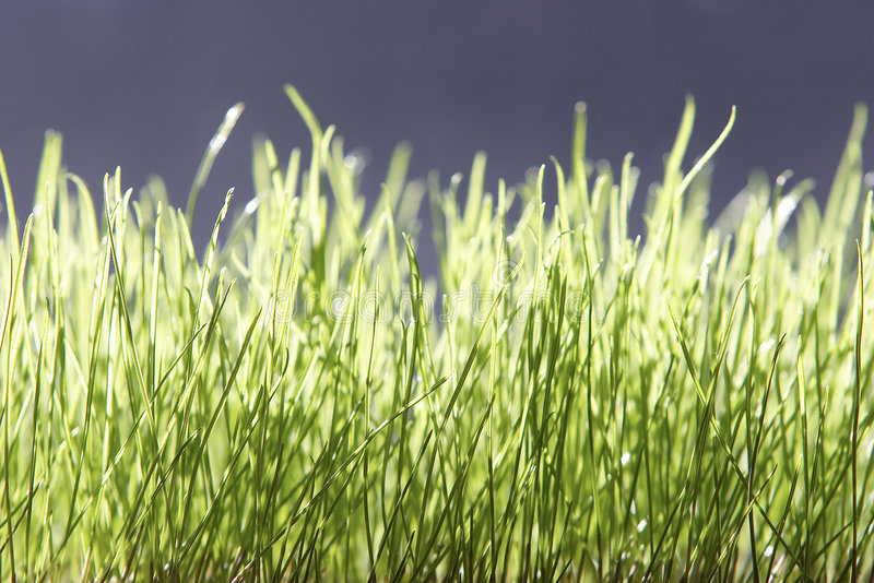 Download Green grass stock image. Image of grass, spring, background - 21637