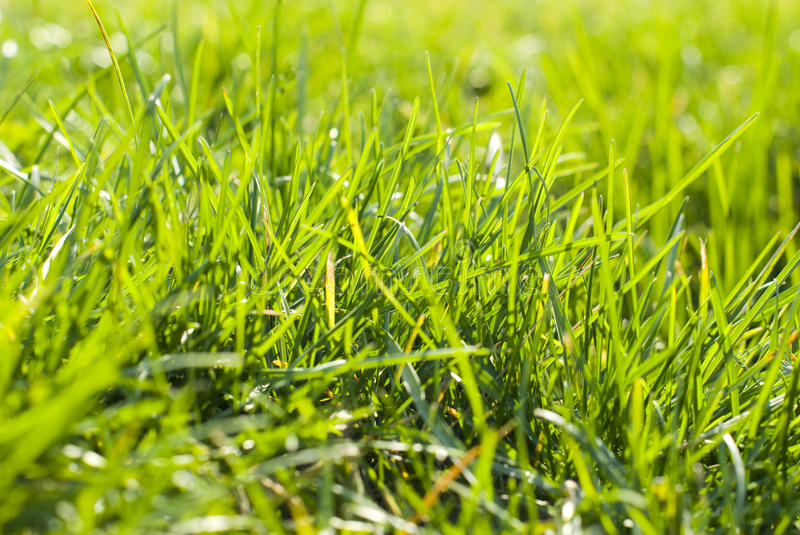 Download Green grass stock image. Image of backgrounds, abstract - 22172723