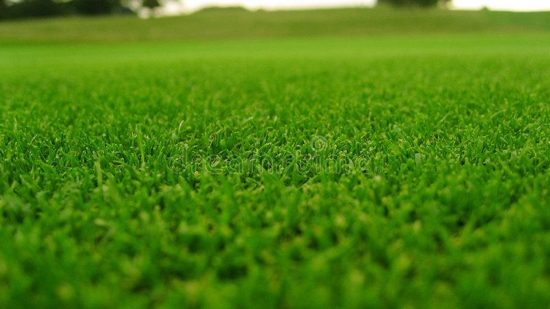 Download Green grass stock photo. Image of detail, golf, field - 2321848