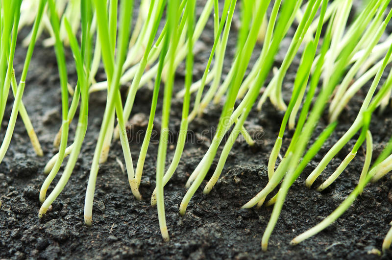 Download Green grass stock photo. Image of environment, bright - 24651160