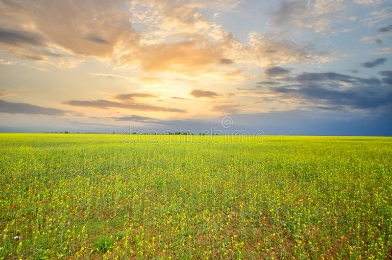Download Green grass stock image. Image of green, leaves, blue - 24992781