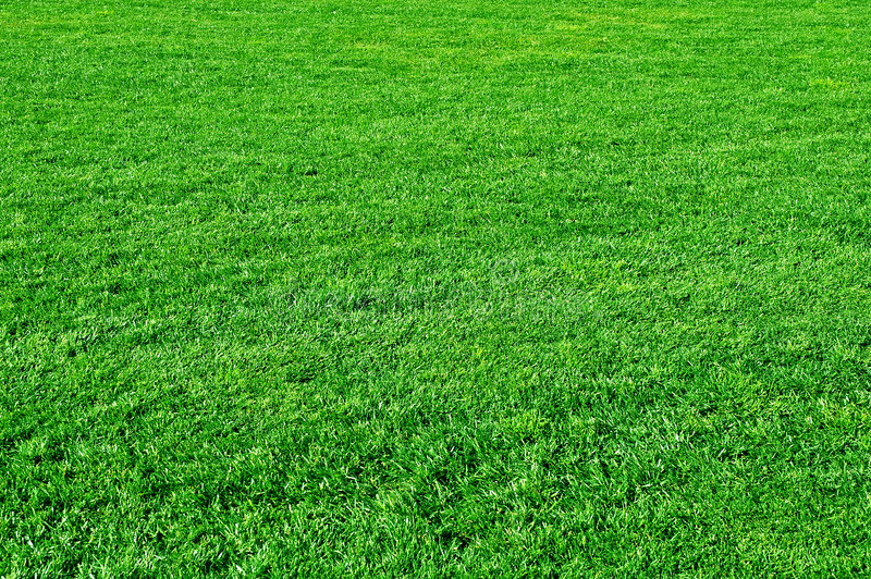 Green grass. Background, green field, lawn royalty free stock image