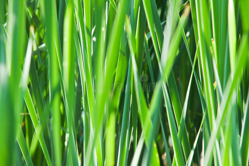 Download Green grass stock image. Image of closeup, environment - 26642599