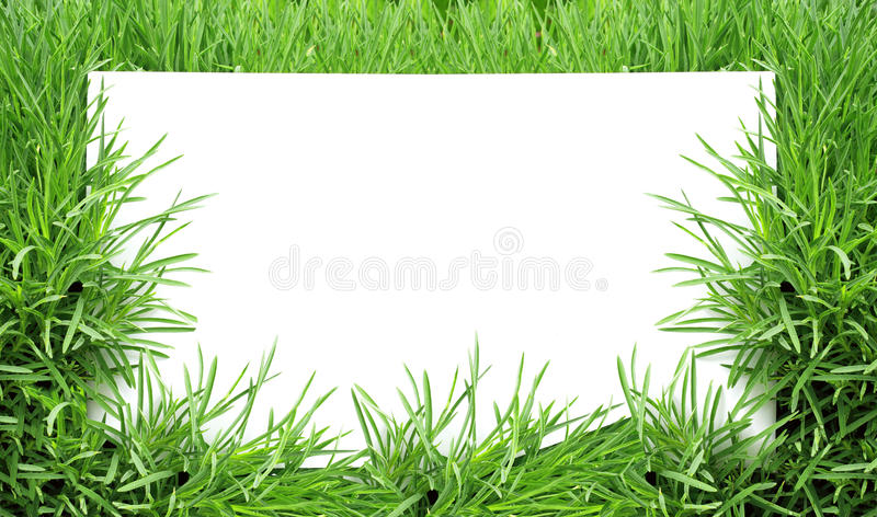 Download Green grass stock photo. Image of drop, saturated, freshness - 28654436