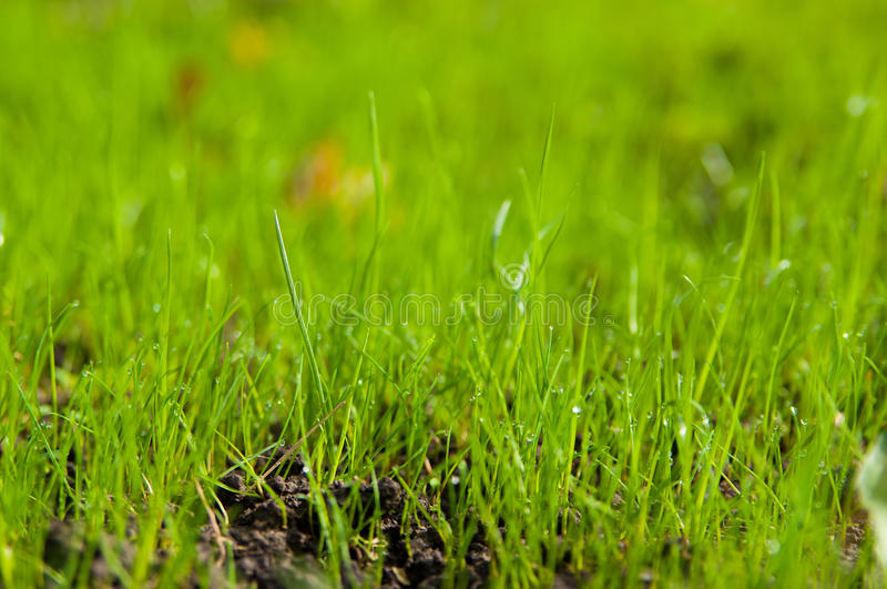 Download Green grass stock image. Image of environment, lawn, bright - 28977117