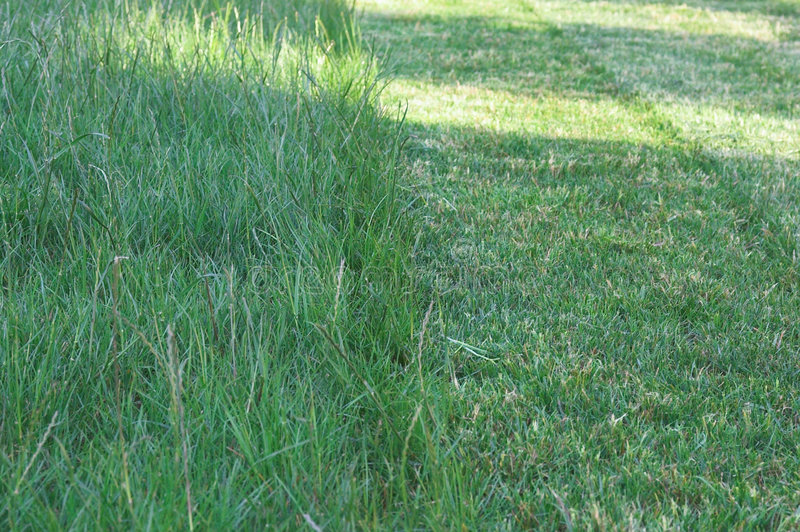 Download Green Grass 3 stock photo. Image of upright, field, ground - 452610