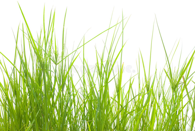 Download Green Grass Stock Images - Image: 4334434