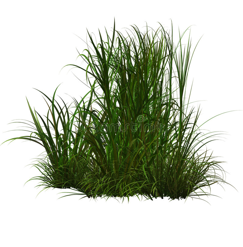 Green grass stock illustration