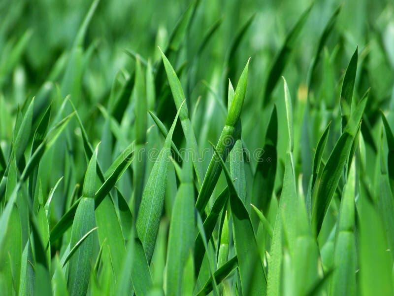 Green Grass Free Public Domain Cc0 Image