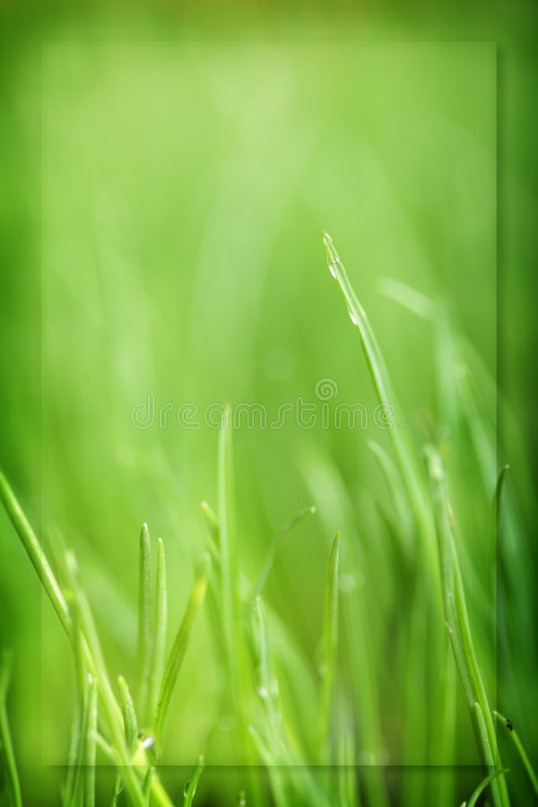 Green grass. Soft focus green grass backgound royalty free stock photos