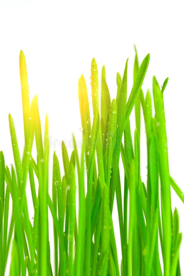 Download Green grass stock image. Image of freshness, purity, nature - 8494019