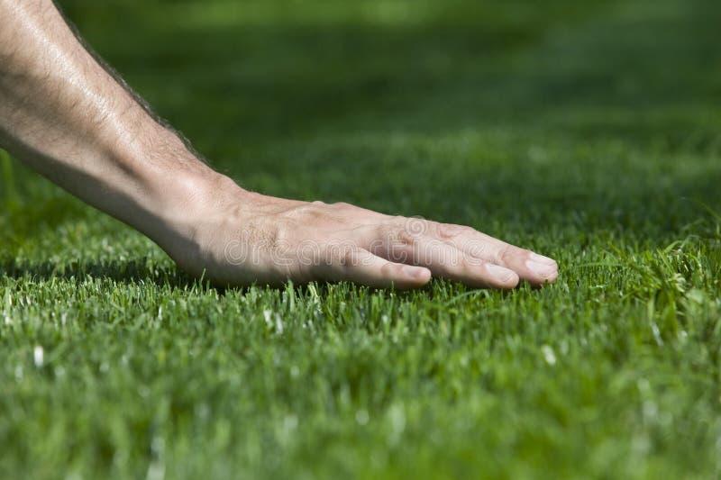 Green Grass. A hand touching fresh cut grass stock image