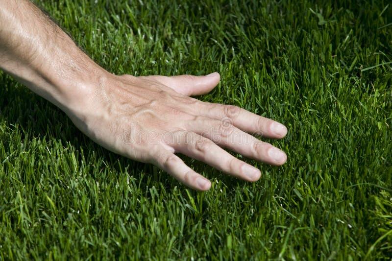 Green Grass. A hand touching fresh cut grass stock photo
